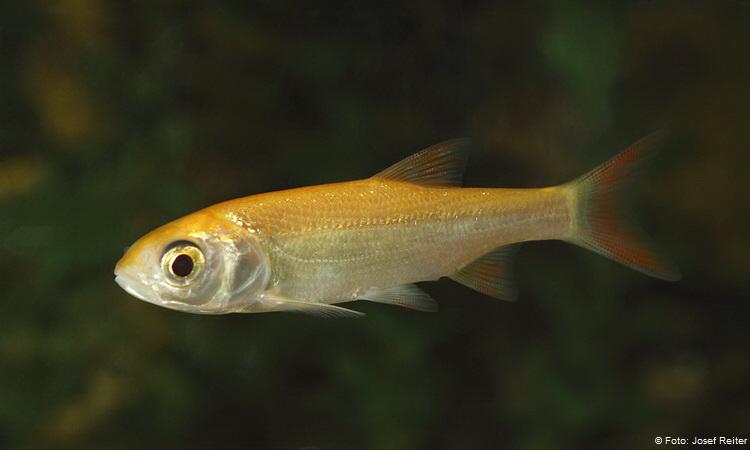 Teichfische und tiere f r den garten for Teichfische versand