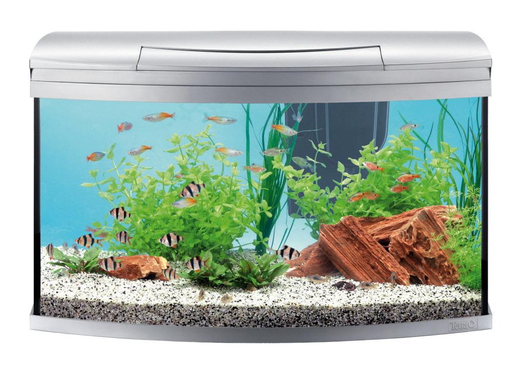 aquaristik aquarien. Black Bedroom Furniture Sets. Home Design Ideas